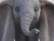 Dumbo Movie Poster 2019