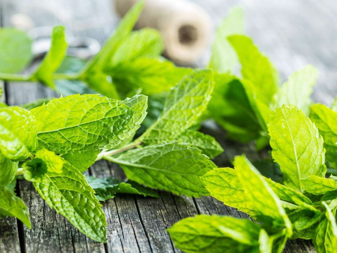 Picking Mint Plants: How To Harvest Mint From Your Garden